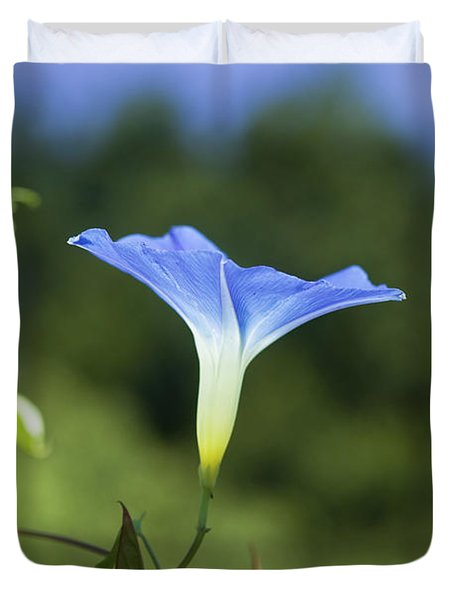 Sun On Morning Glory Duvet Cover by Rich Franco