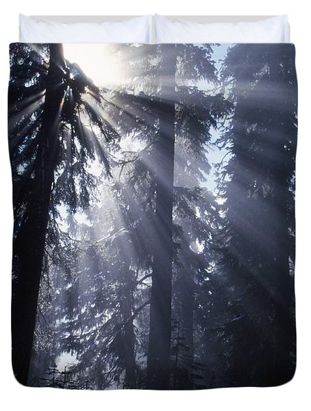 Sunbeams Through Pine Trees Duvet Cover by Natural Selection Craig Tuttle