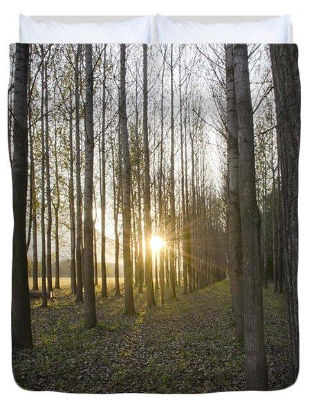 Sunlight In The Forest Duvet Cover