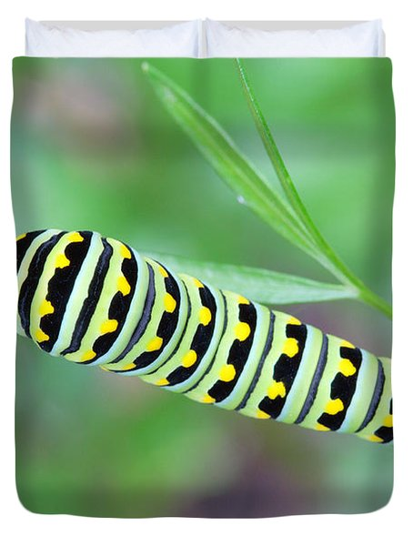 Swallowtail Caterpillar On Parsley Duvet Cover
