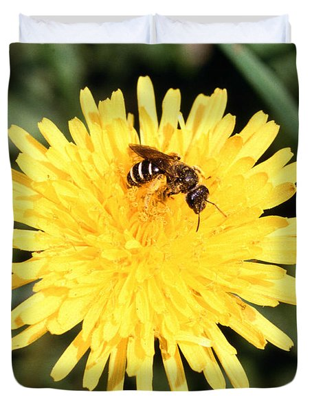 Sweat Bee Duvet Cover by Science Source