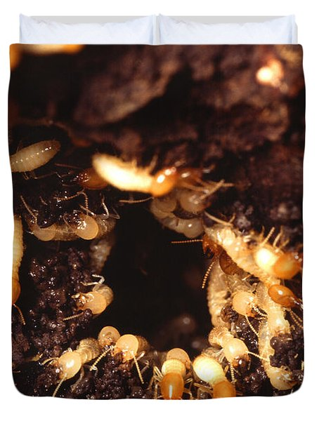 Termite Nest Duvet Cover by Science Source