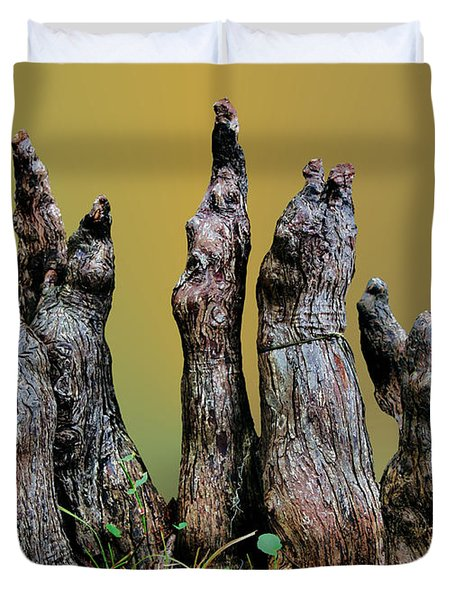 The Cypress Knees Chorus Duvet Cover by Kristin Elmquist