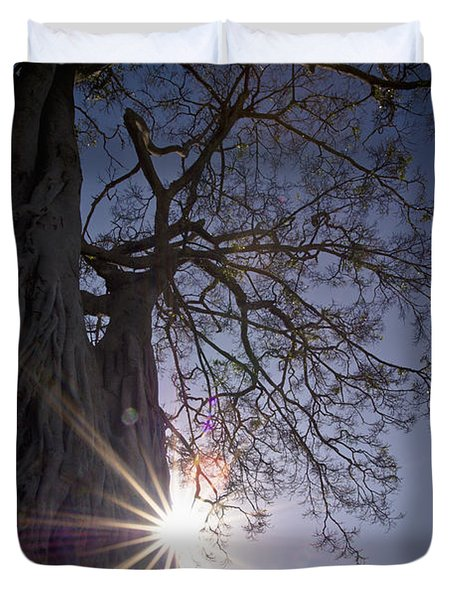 The Sunlight Shines Behind A Tree Trunk Duvet Cover by David DuChemin