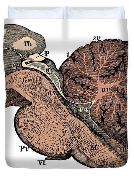 Third And Fourth Ventricles Of The Brain Duvet Cover
