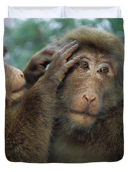 Tibetan Macaque Macaca Thibetana One Duvet Cover by Cyril Ruoso