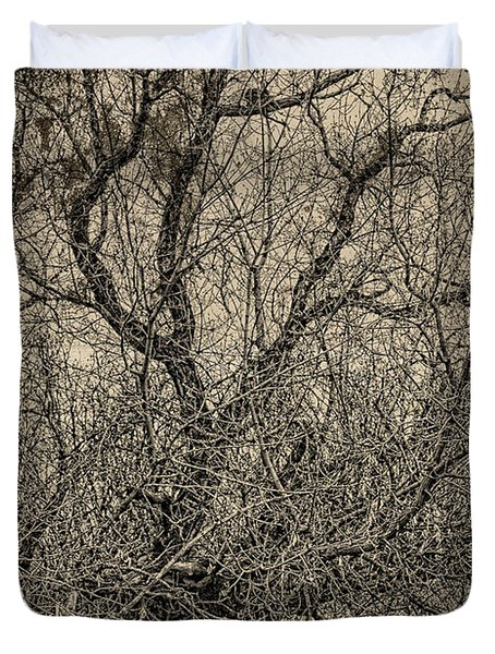 Tickle Of Branches  Duvet Cover by Jerry Cordeiro