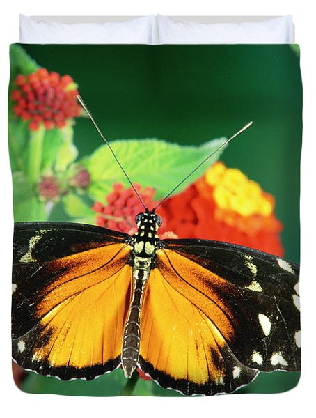 Tiger Longwing Heliconius Hecale Duvet Cover by Michael & Patricia Fogden