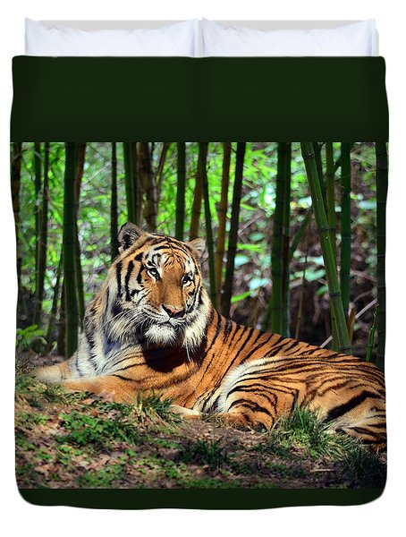 Tiger Rest And Bamboo Duvet Cover by Sandi OReilly