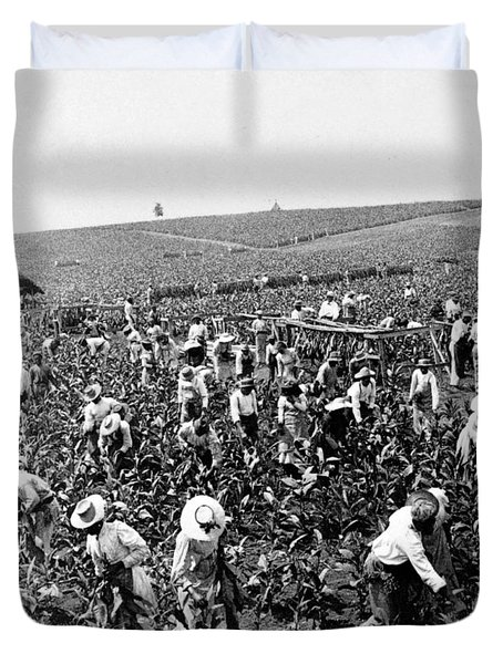 Tobacco Field In Montpelier - Jamaica - C 1900 Duvet Cover
