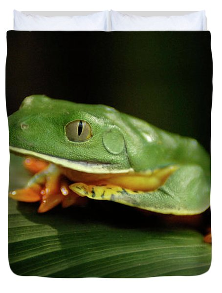 Tree Frog 1 Duvet Cover by Bob Christopher