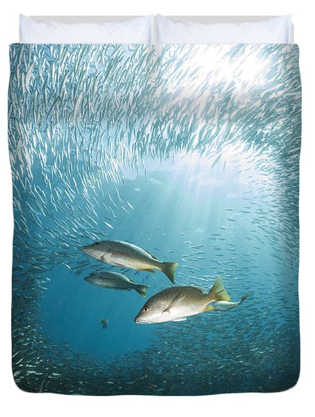 Trio Of Snappers Hunting For Bait Fish Duvet Cover by Todd Winner