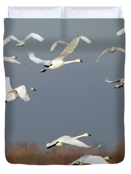 Tundra Swan Takeoff Duvet Cover by Mike  Dawson