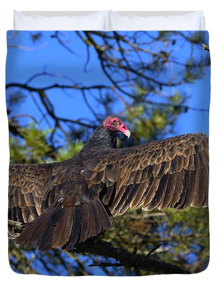 Turkey Vulture With Wings Spread Duvet Cover by Sharon Talson