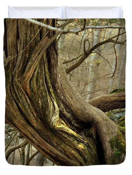 Twisted Cedar Duvet Cover by Marty Koch