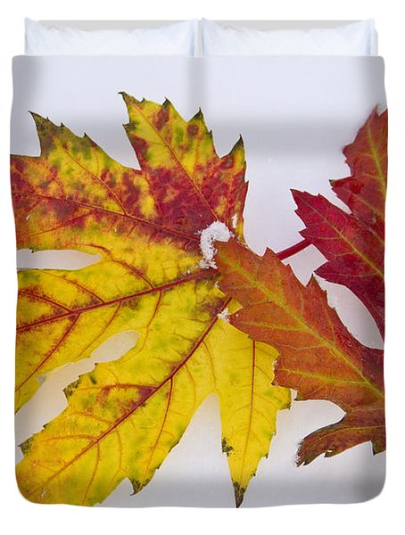Two Autumn Maple Leaves  Duvet Cover by James BO  Insogna