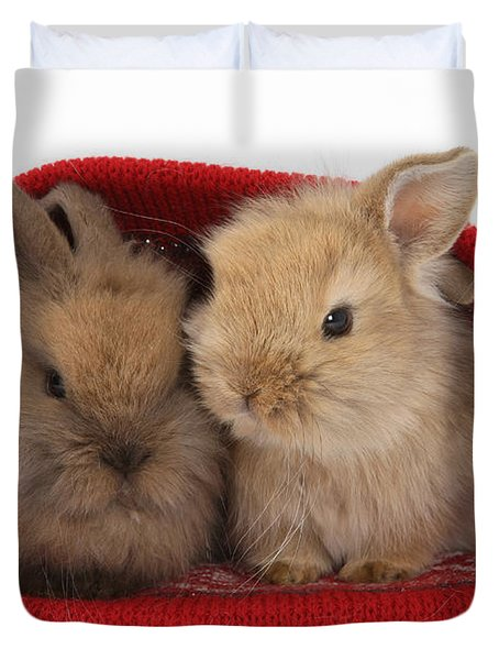 Two Baby Lionhead-cross Rabbits Duvet Cover by Mark Taylor
