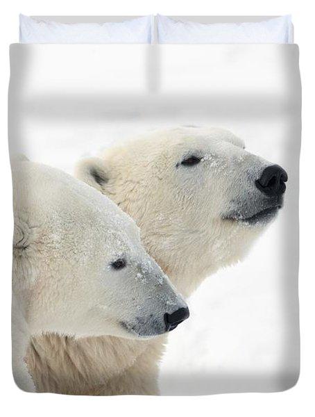 Two Polar Bears Ursus Maritimus Showing Duvet Cover by Richard Wear