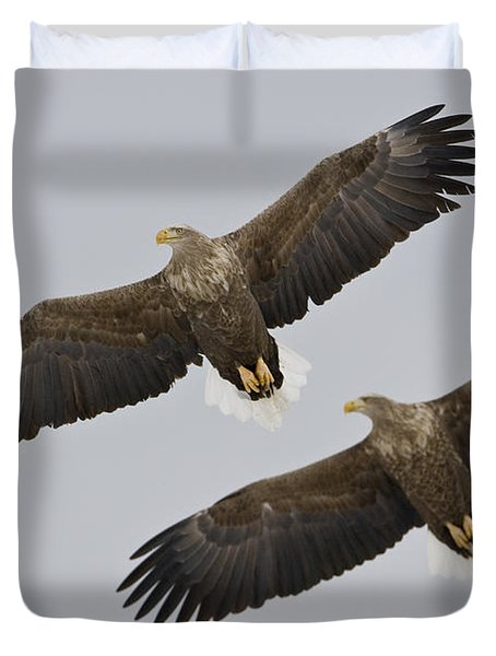 Two White-tailed Eagles In Flight Side Duvet Cover by Roy Toft