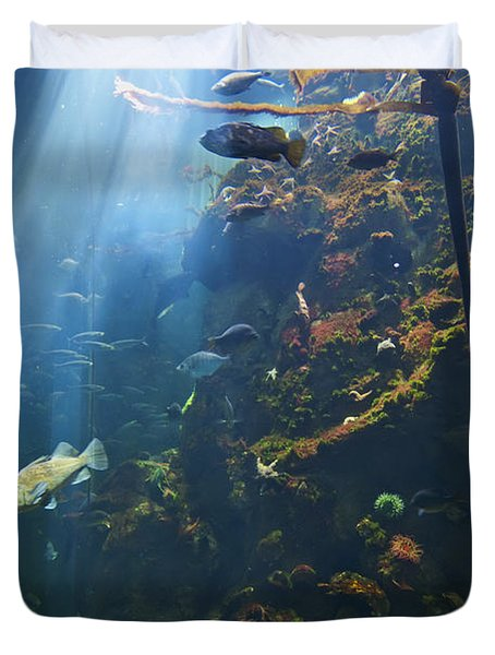 View Of Fish In An Aquarium In The San Duvet Cover by Laura Ciapponi