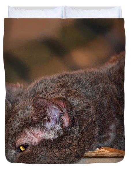 Warm Kitty Iv Duvet Cover by Debbie Portwood