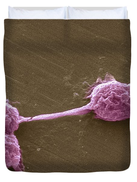 Water Biofilm With H. Vermiformis Cysts Duvet Cover by Science Source