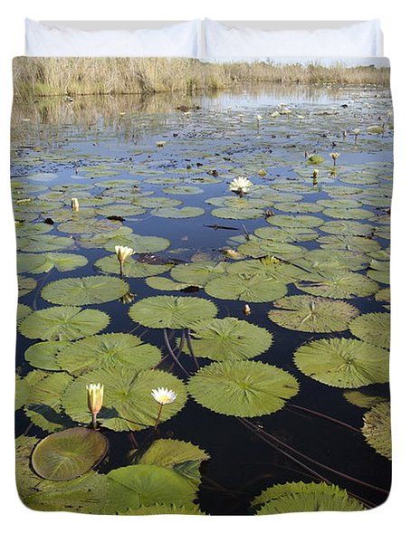 Water Lily Nymphaea Sp Flowering Duvet Cover by Matthias Breiter