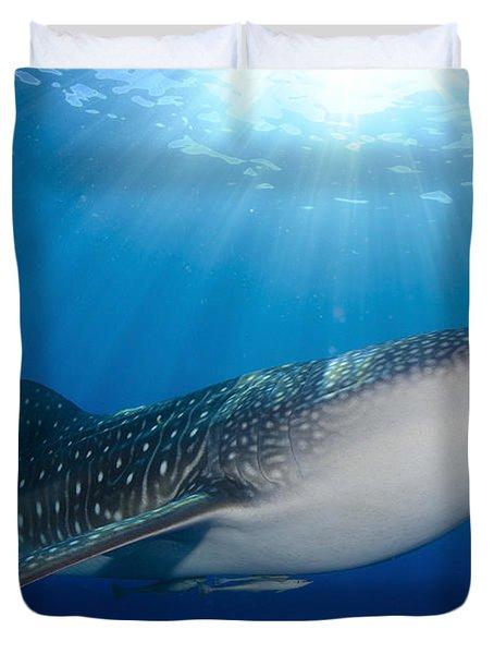 Whale Shark Feeding Under Fishing Duvet Cover by Steve Jones