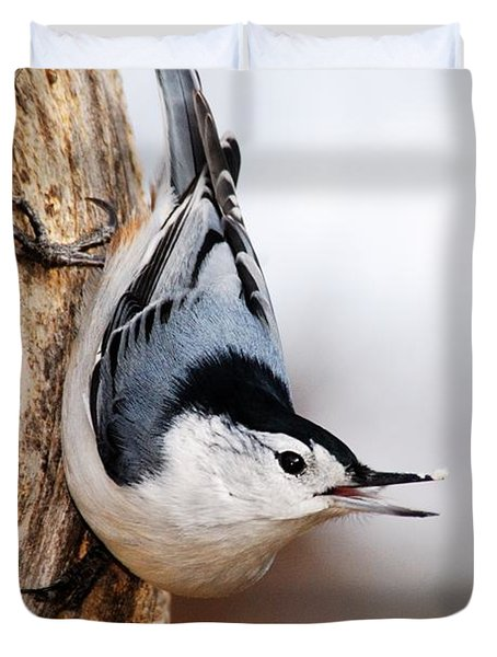 White-breasted Nuthatch 3 Duvet Cover by Larry Ricker