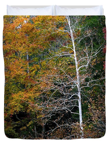 White Tree Fall Colors  Duvet Cover by Rich Franco