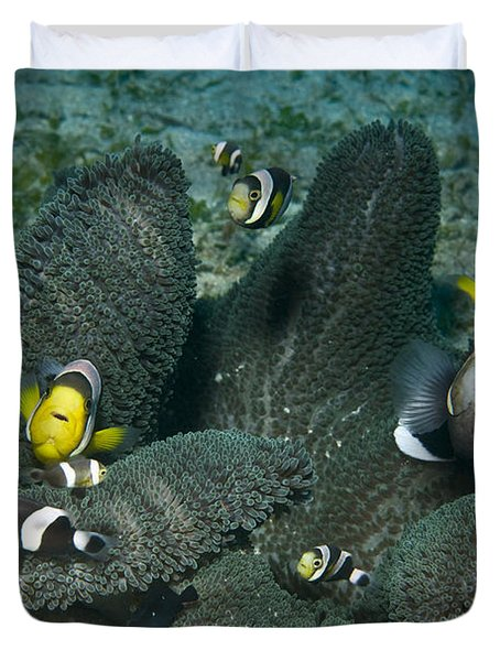 Whole Family Of Clownfish In Dark Grey Duvet Cover by Mathieu Meur