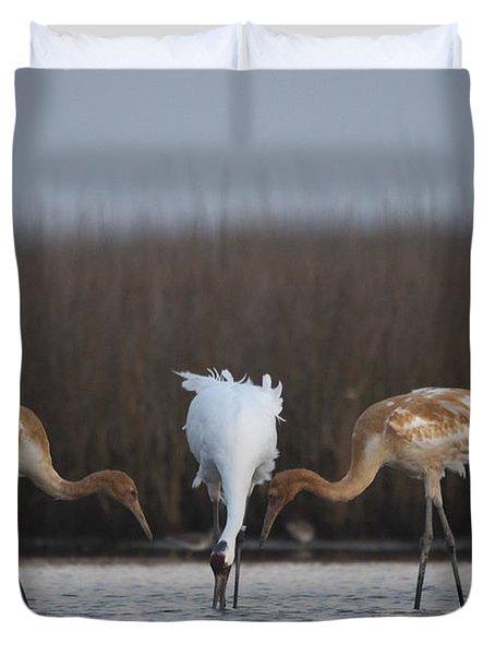Whooping Crane Siblings Beg For Food Duvet Cover