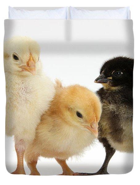 Yellow And Black Bantam Chicks Duvet Cover by Mark Taylor