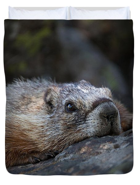 Yellow Bellied Marmot  Duvet Cover