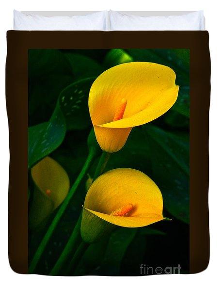 Yellow Calla Lilies Duvet Cover by Byron Varvarigos