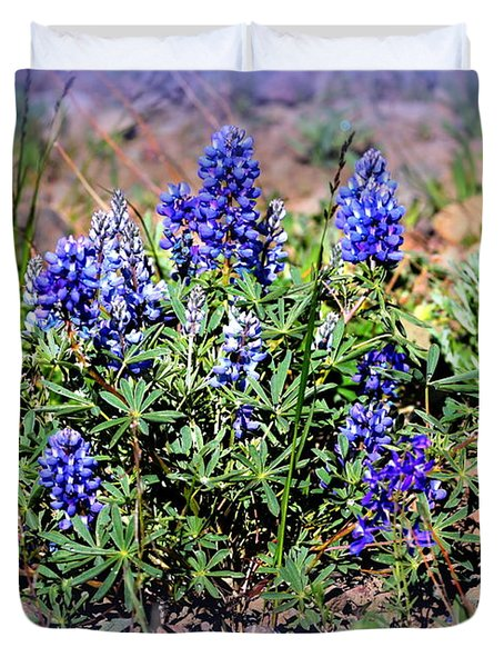 Yellowstone Lupine Blue Duvet Cover by Carol Groenen