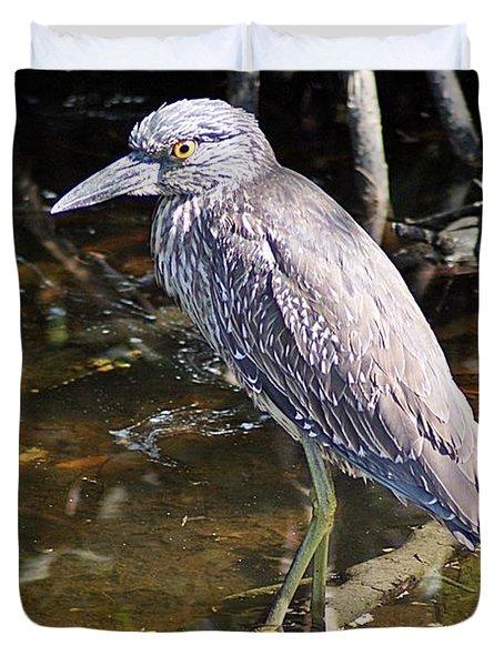 Yelow-crowned Night Heron 1 Duvet Cover by Joe Faherty