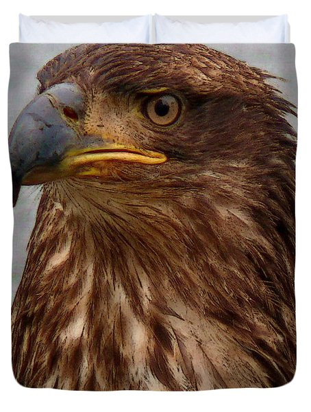Young Bald Eagle Portrait Duvet Cover
