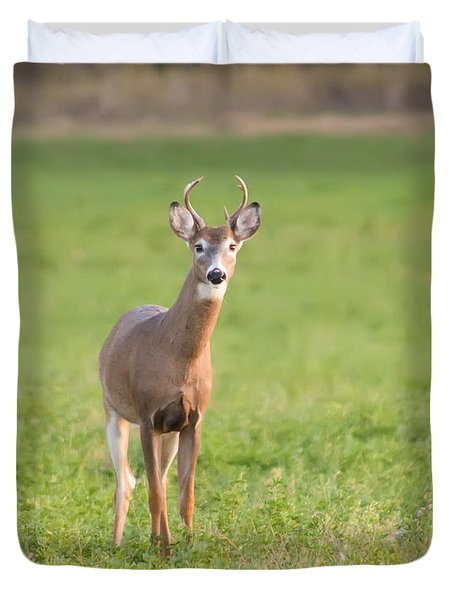 Young Buck Duvet Cover by Art Whitton