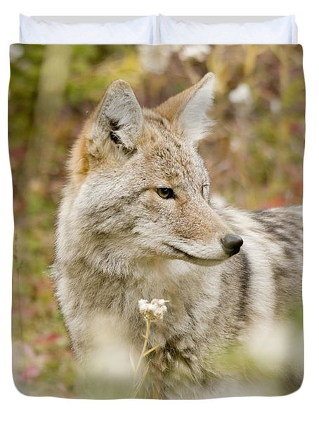 Young Coyote Canis Latrans In A Forest Duvet Cover by Philippe Widling