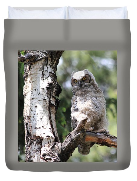 Young Owl Duvet Cover by Shane Bechler