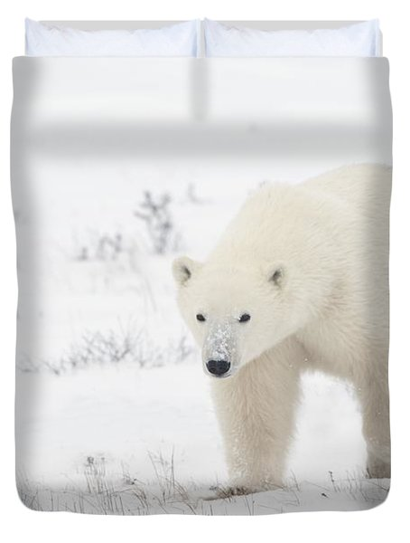 Young Polar Bear Ursus Maritimus Walks Duvet Cover by Richard Wear