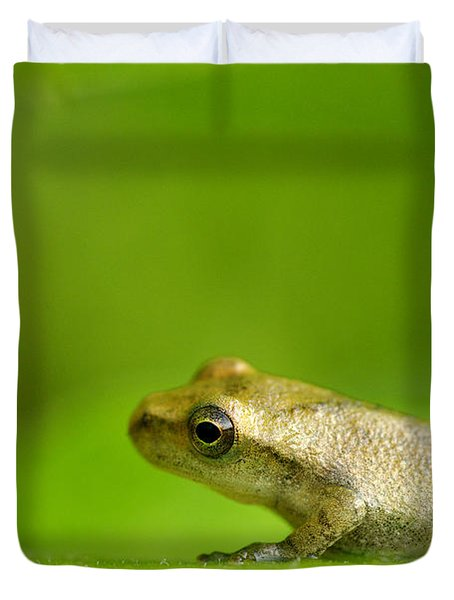 Young Spring Peeper Pseudacris Crucifer Duvet Cover by Steeve Marcoux