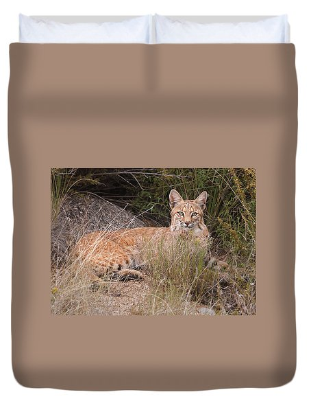 Bobcat At Rest Duvet Cover