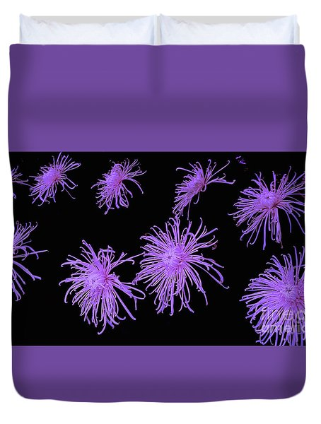 Chrysanthemums In Purple Duvet Cover