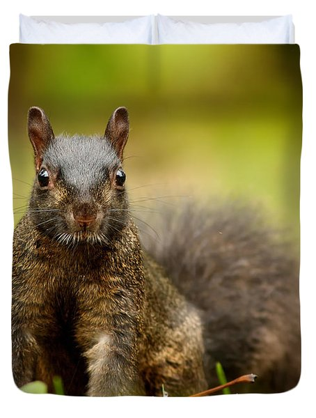 Curious Black Squirrel Duvet Cover by Mircea Costina Photography