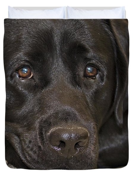 Labrador Retriever A1b Duvet Cover