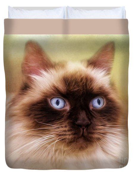 Duvet Cover featuring the digital art  Ragdoll Cat by Trudi Simmonds