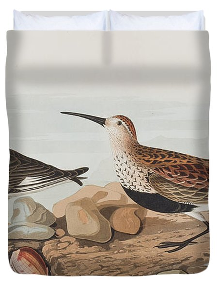 Red Backed Sandpiper Duvet Cover by John James Audubon