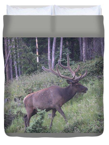 Bull Elk Rmnp Co Duvet Cover